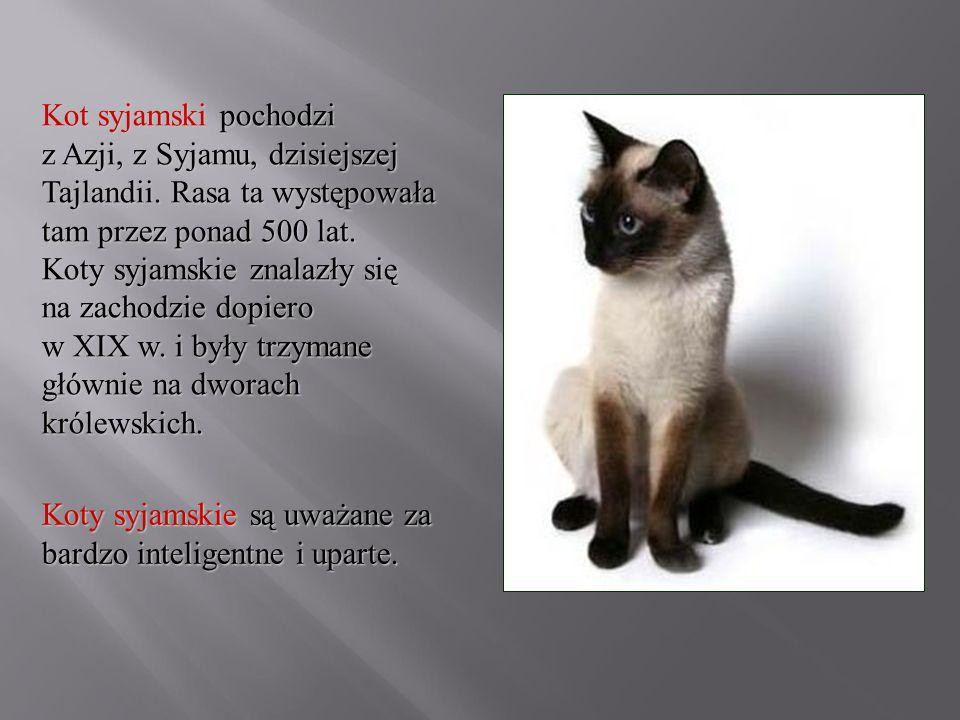 Kot syjamski pochodzi z Azji, z Syjamu, dzisiejszej Tajlandii. Rasa ta występowała tam przez ponad 500 lat. Koty syjamskie znalazły się na zachodzie d