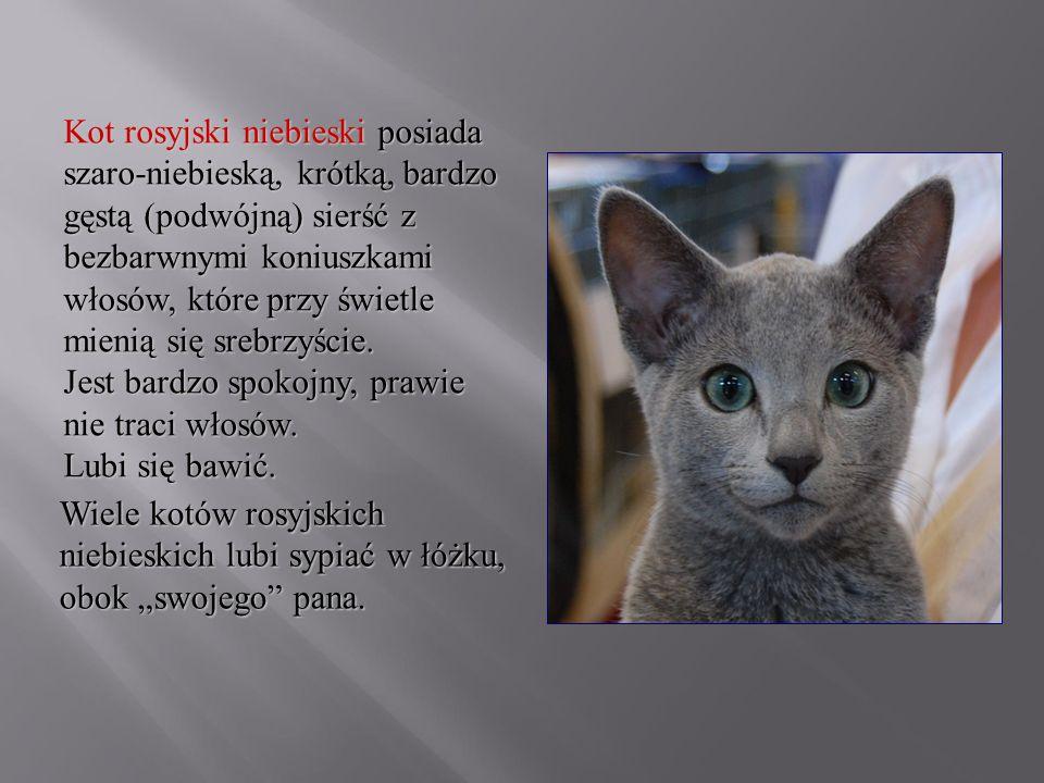 Kot rosyjski niebieski posiada szaro-niebieską, krótką, bardzo gęstą (podwójną) sierść z bezbarwnymi koniuszkami włosów, które przy świetle mienią się