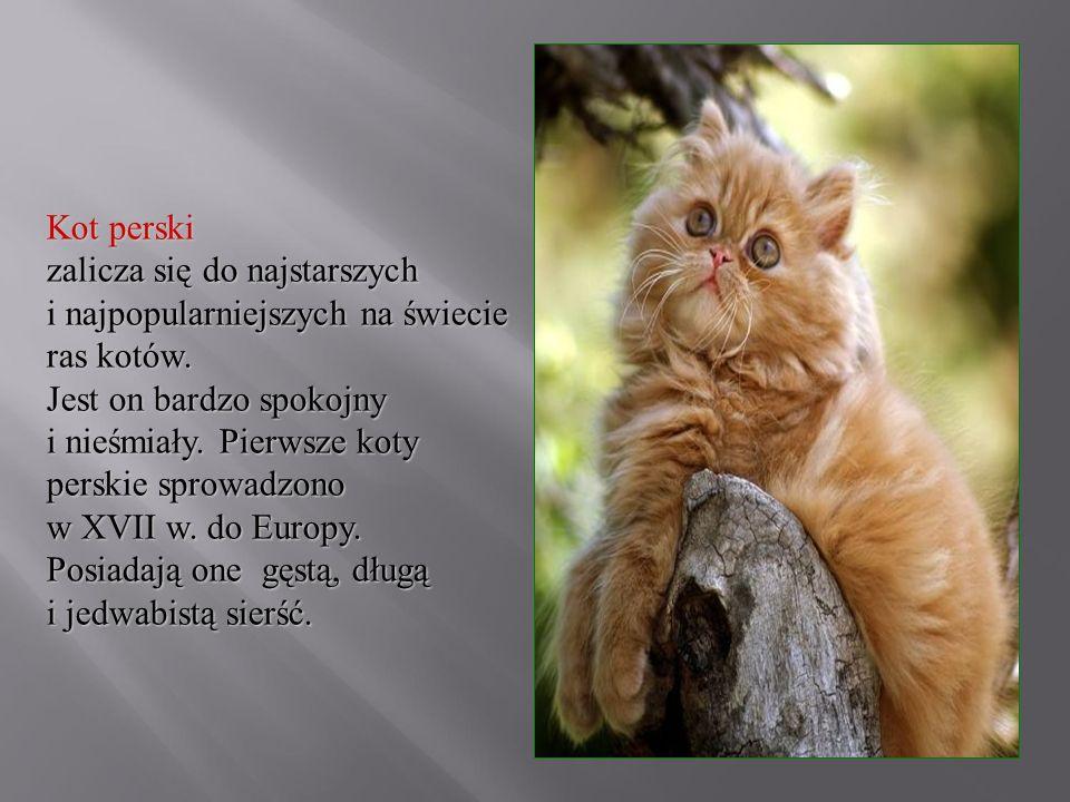 Kot perski zalicza się do najstarszych i najpopularniejszych na świecie ras kotów. Jest on bardzo spokojny i nieśmiały. Pierwsze koty perskie sprowadz