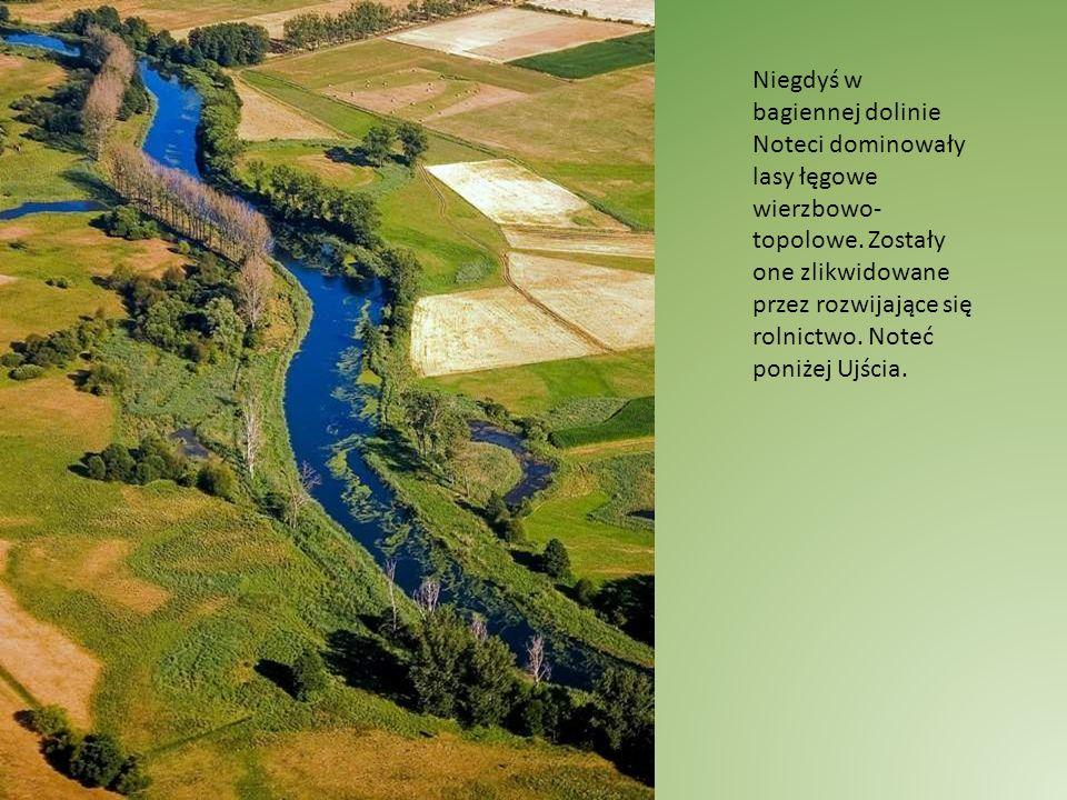 Przy śluzie uchodzi do Noteci Krępica, na której znajduje się kompleks dużych stawów rybackich.
