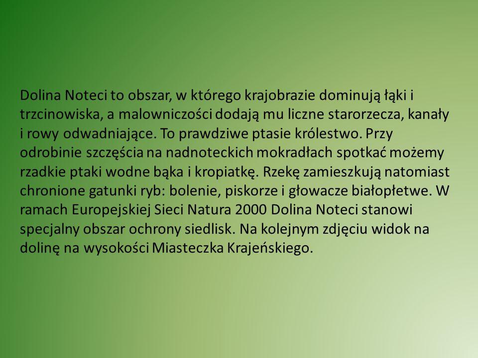 Za Notecią miejscowość Nowe Dwory.