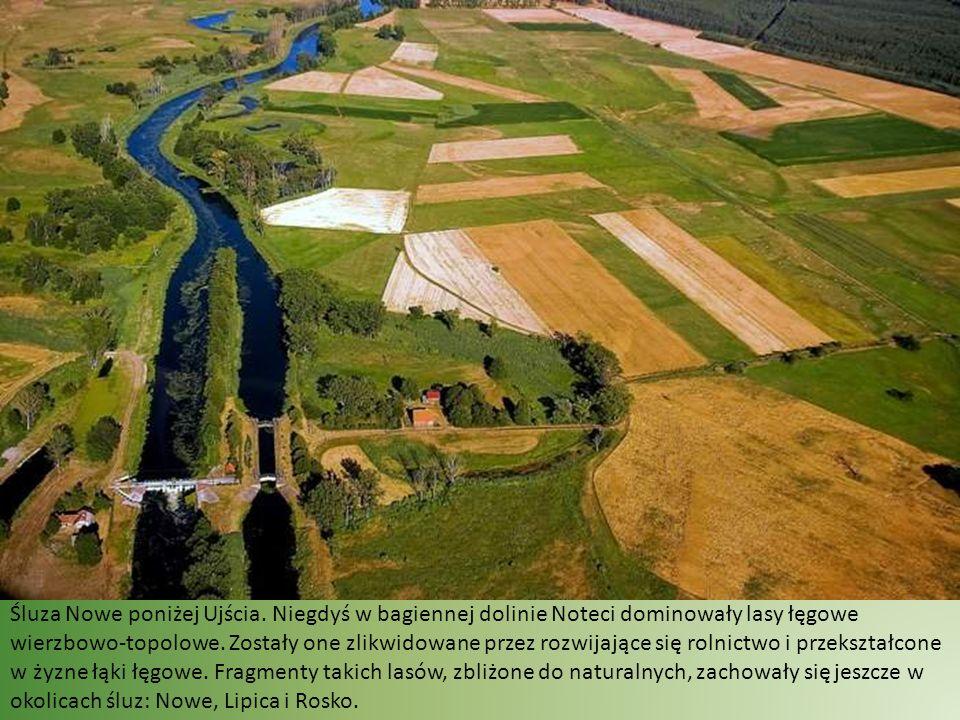 Rzeka dzięki stopniom wodnym, płynie wolno.Zarasta przez to rzęsą i inną roślinnością wodną.
