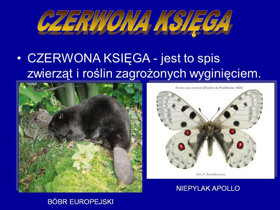 CZERWONA KSIĘGA - jest to spis zwierząt i roślin zagrożonych wyginięciem.