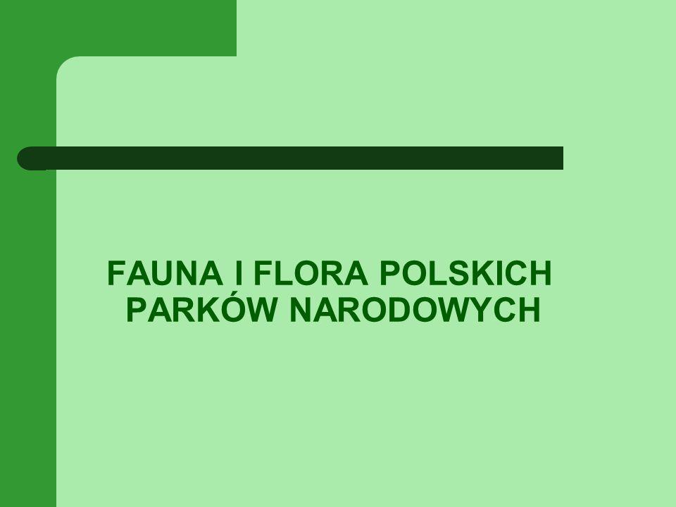 FAUNA I FLORA POLSKICH PARKÓW NARODOWYCH