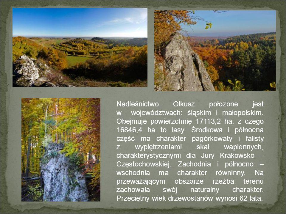 Nadleśnictwo Olkusz położone jest w województwach: śląskim i małopolskim.