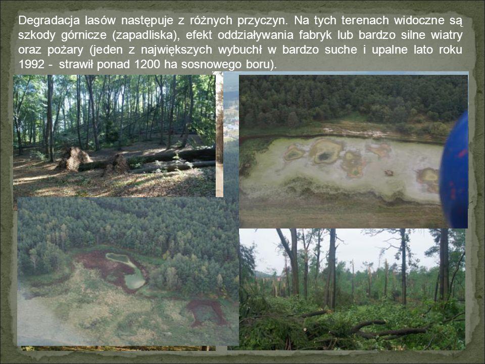 Mimo przemysłowego charakteru Nadleśnictwa Olkusz ma ono na swoim terenie trzy rezerwaty.