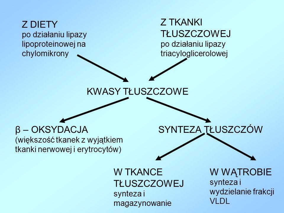 KWASY TŁUSZCZOWE β – OKSYDACJA (większość tkanek z wyjątkiem tkanki nerwowej i erytrocytów) SYNTEZA TŁUSZCZÓW W WĄTROBIE synteza i wydzielanie frakcji