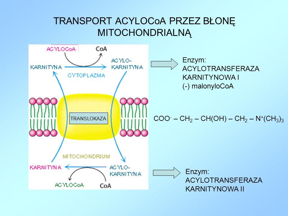 TRANSPORT ACYLOCoA PRZEZ BŁONĘ MITOCHONDRIALNĄ Enzym: ACYLOTRANSFERAZA KARNITYNOWA I (-) malonyloCoA Enzym: ACYLOTRANSFERAZA KARNITYNOWA II COO - – CH