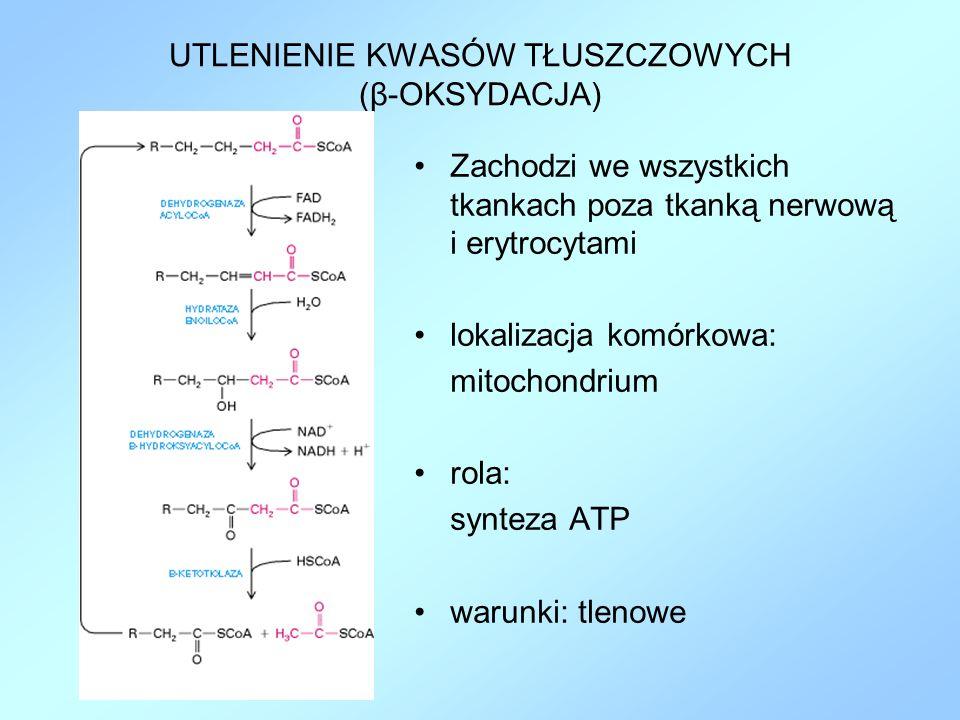 UTLENIENIE KWASÓW TŁUSZCZOWYCH (β-OKSYDACJA) Zachodzi we wszystkich tkankach poza tkanką nerwową i erytrocytami lokalizacja komórkowa: mitochondrium r
