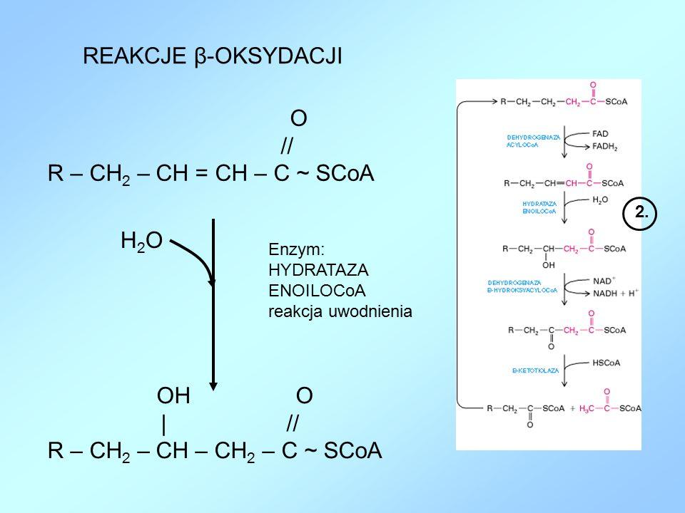REAKCJE β-OKSYDACJI O // R – CH 2 – CH = CH – C ~ SCoA Enzym: HYDRATAZA ENOILOCoA reakcja uwodnienia OH O | // R – CH 2 – CH – CH 2 – C ~ SCoA H2OH2O