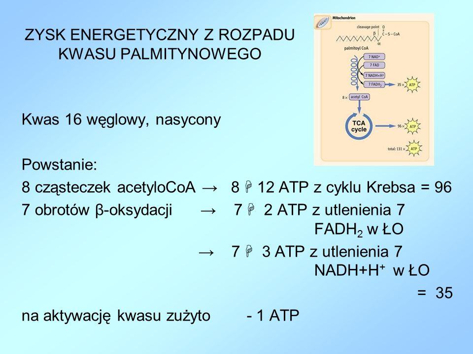 ZYSK ENERGETYCZNY Z ROZPADU KWASU PALMITYNOWEGO Kwas 16 węglowy, nasycony Powstanie: 8 cząsteczek acetyloCoA → 8  12 ATP z cyklu Krebsa = 96 7 obrotó