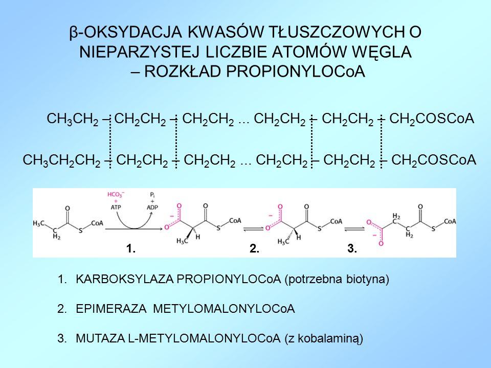 β-OKSYDACJA KWASÓW TŁUSZCZOWYCH O NIEPARZYSTEJ LICZBIE ATOMÓW WĘGLA – ROZKŁAD PROPIONYLOCoA CH 3 CH 2 – CH 2 CH 2 – CH 2 CH 2... CH 2 CH 2 – CH 2 CH 2
