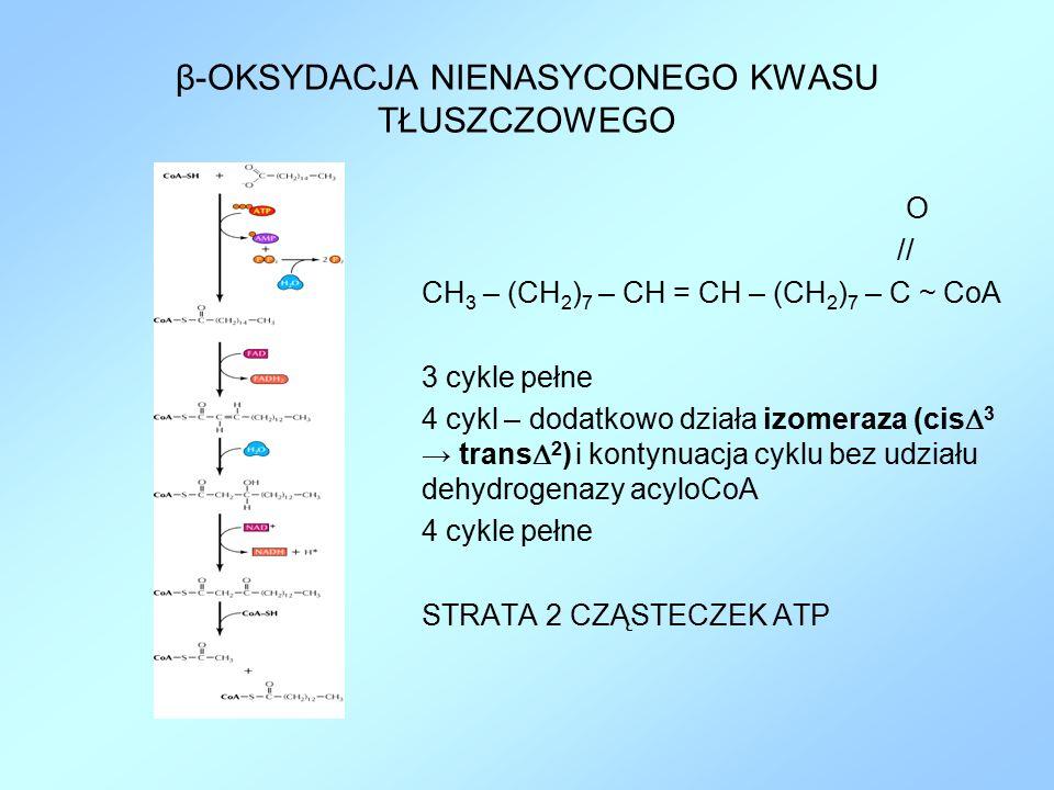 β-OKSYDACJA NIENASYCONEGO KWASU TŁUSZCZOWEGO O // CH 3 – (CH 2 ) 7 – CH = CH – (CH 2 ) 7 – C ~ CoA 3 cykle pełne 4 cykl – dodatkowo działa izomeraza (