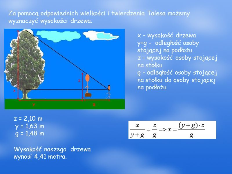 Za pomocą odpowiednich wielkości i twierdzenia Talesa możemy wyznaczyć wysokości drzewa.
