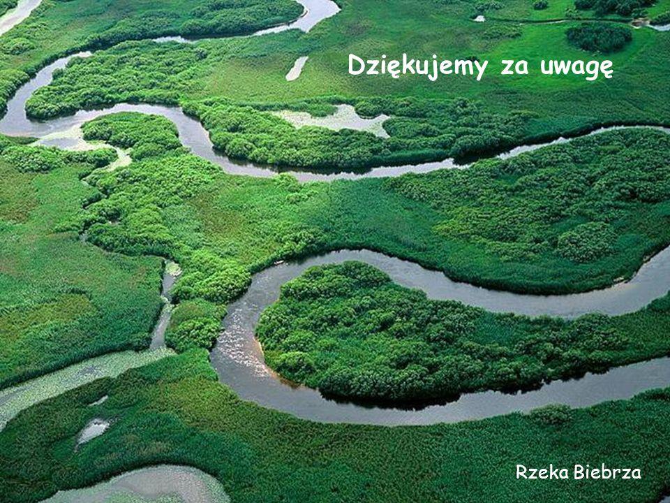 Rzeka Biebrza Dziękujemy za uwagę