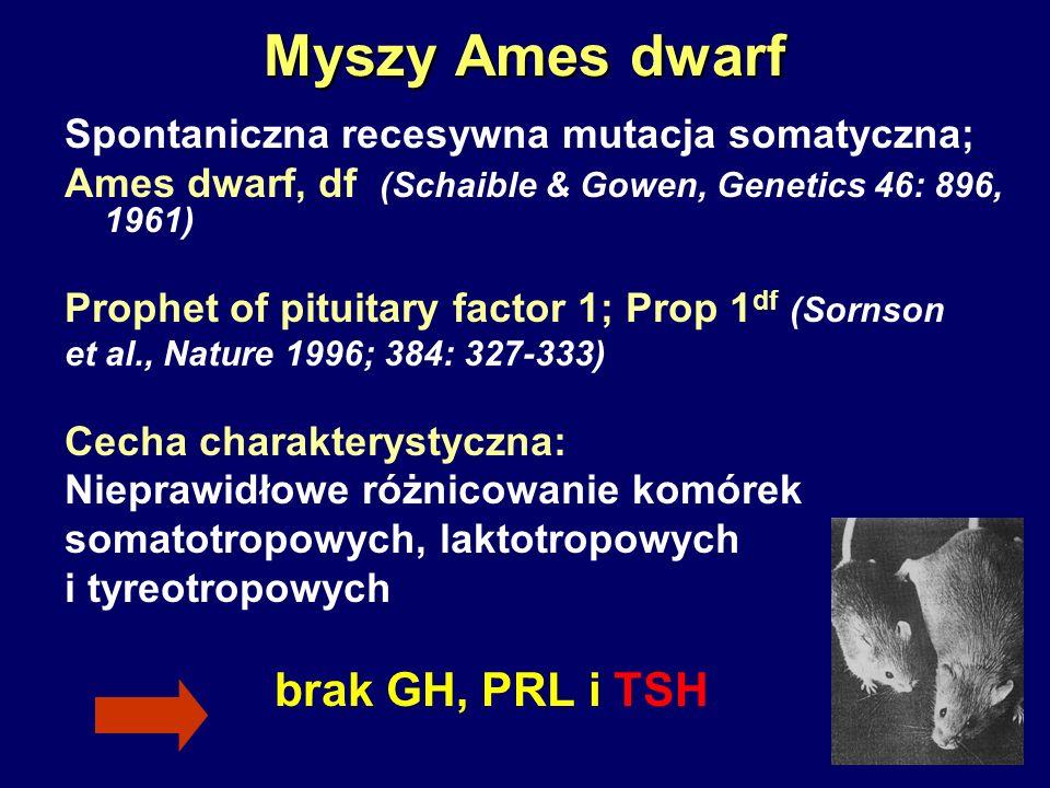 Myszy Ames dwarf Spontaniczna recesywna mutacja somatyczna; Ames dwarf, df (Schaible & Gowen, Genetics 46: 896, 1961) Prophet of pituitary factor 1; P