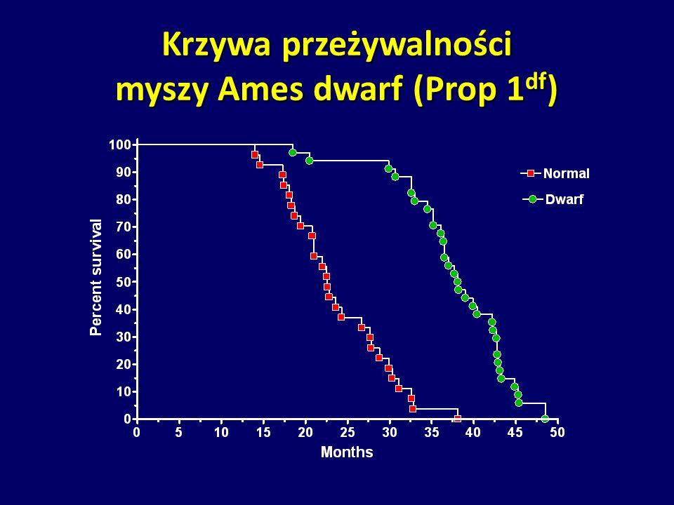 Krzywa przeżywalności myszy Ames dwarf (Prop 1 df )