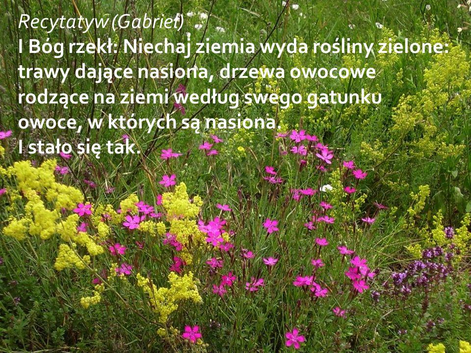 Recytatyw (Gabriel) I Bóg rzekł: Niechaj ziemia wyda rośliny zielone: trawy dające nasiona, drzewa owocowe rodzące na ziemi według swego gatunku owoce, w których są nasiona.