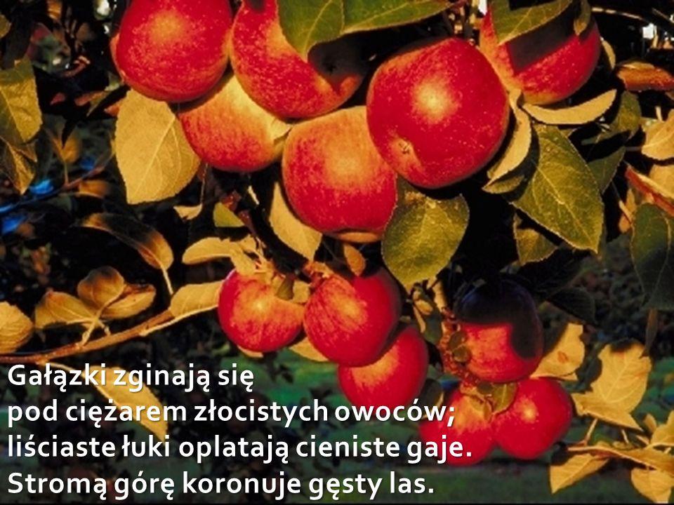 Gałązki zginają się pod ciężarem złocistych owoców; liściaste łuki oplatają cieniste gaje.