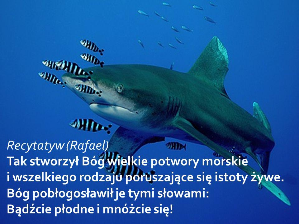 Recytatyw (Rafael) Tak stworzył Bóg wielkie potwory morskie i wszelkiego rodzaju poruszające się istoty żywe.