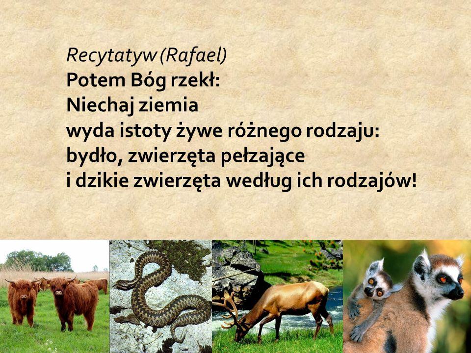 Recytatyw (Rafael) Potem Bóg rzekł: Niechaj ziemia wyda istoty żywe różnego rodzaju: bydło, zwierzęta pełzające i dzikie zwierzęta według ich rodzajów!