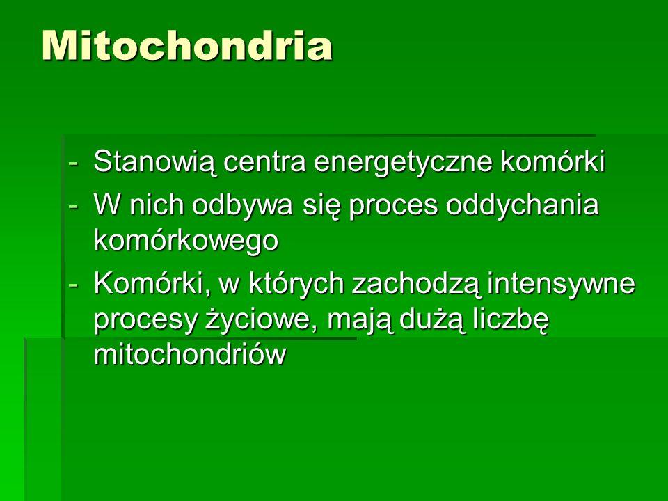 Mitochondria -Stanowią centra energetyczne komórki -W nich odbywa się proces oddychania komórkowego -Komórki, w których zachodzą intensywne procesy ży