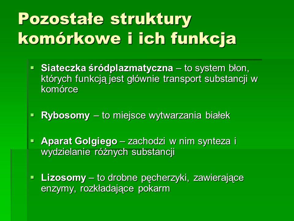 Pozostałe struktury komórkowe i ich funkcja  Siateczka śródplazmatyczna – to system błon, których funkcją jest głównie transport substancji w komórce