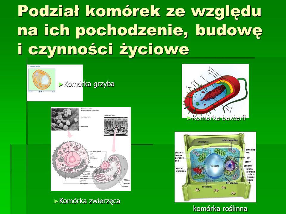 Podział komórek ze względu na ich pochodzenie, budowę i czynności życiowe ► Komórka bakterii ► Komórka grzyba ► Komórka zwierzęca komórka roślinna