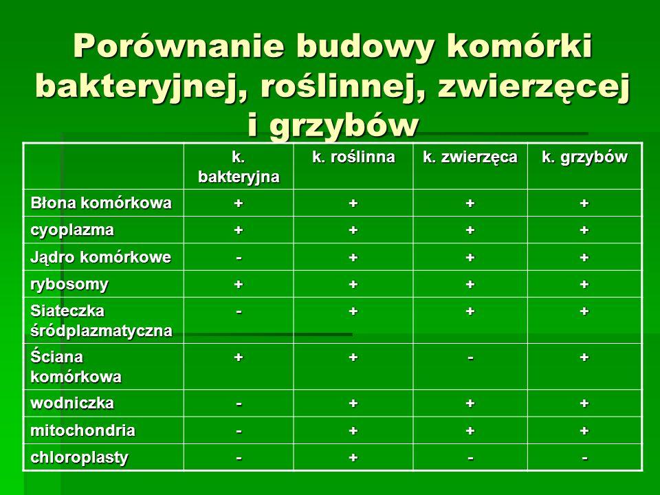 Porównanie budowy komórki bakteryjnej, roślinnej, zwierzęcej i grzybów k. bakteryjna k. roślinna k. zwierzęca k. grzybów Błona komórkowa ++++ cyoplazm