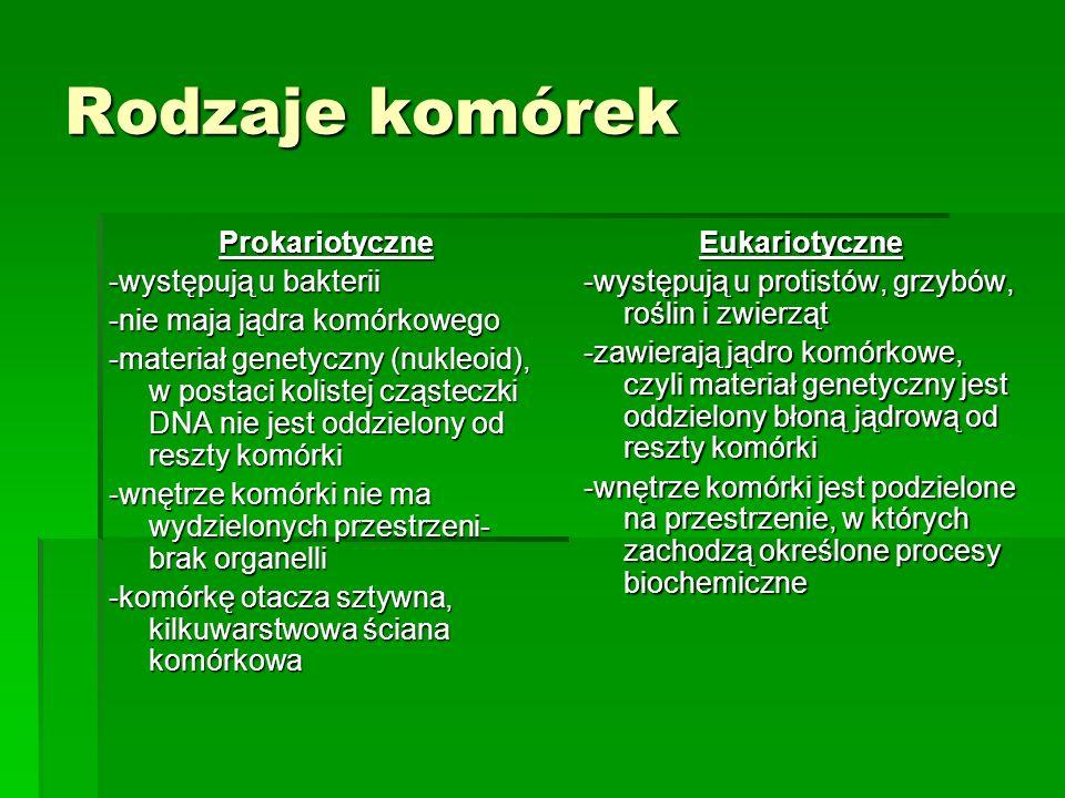 Rodzaje komórek Prokariotyczne -występują u bakterii -nie maja jądra komórkowego -materiał genetyczny (nukleoid), w postaci kolistej cząsteczki DNA ni