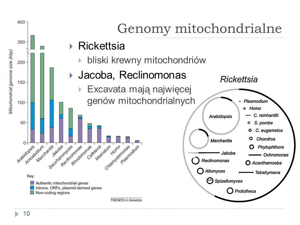 Genomy mitochondrialne 10  Rickettsia  bliski krewny mitochondriów  Jacoba, Reclinomonas  Excavata mają najwięcej genów mitochondrialnych