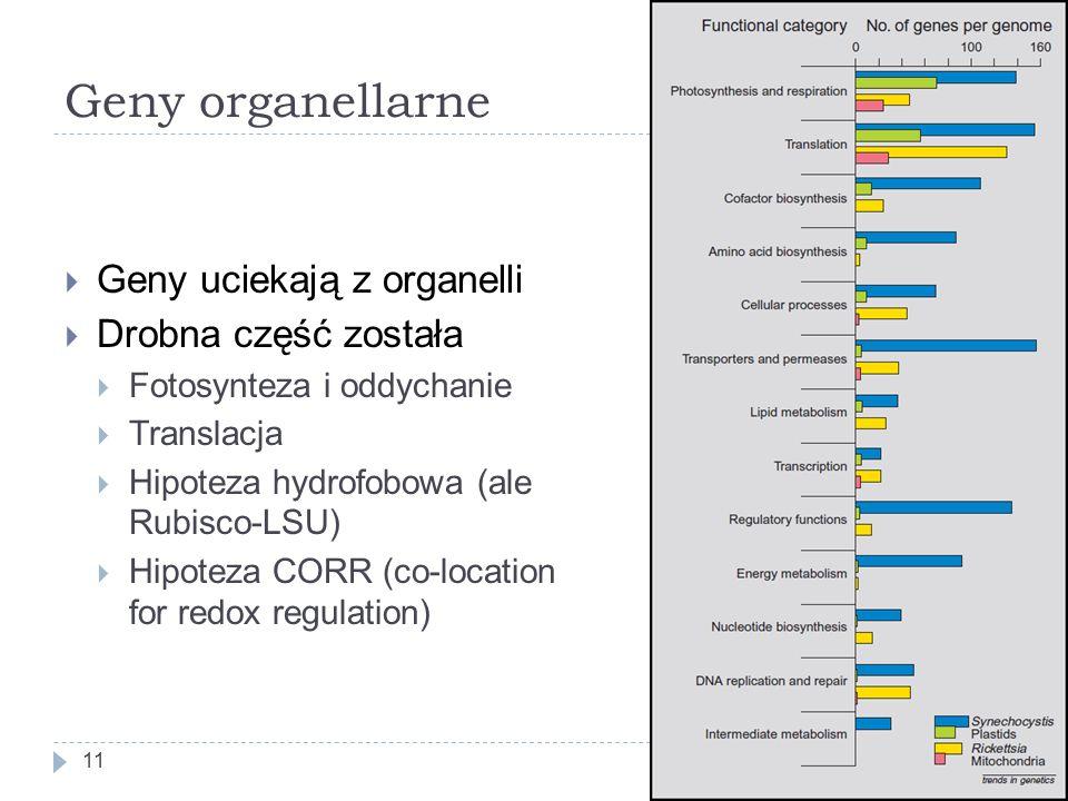 Geny organellarne 11  Geny uciekają z organelli  Drobna część została  Fotosynteza i oddychanie  Translacja  Hipoteza hydrofobowa (ale Rubisco-LSU)  Hipoteza CORR (co-location for redox regulation)