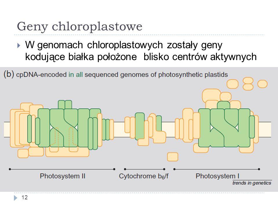 Geny chloroplastowe 12  W genomach chloroplastowych zostały geny kodujące białka położone blisko centrów aktywnych