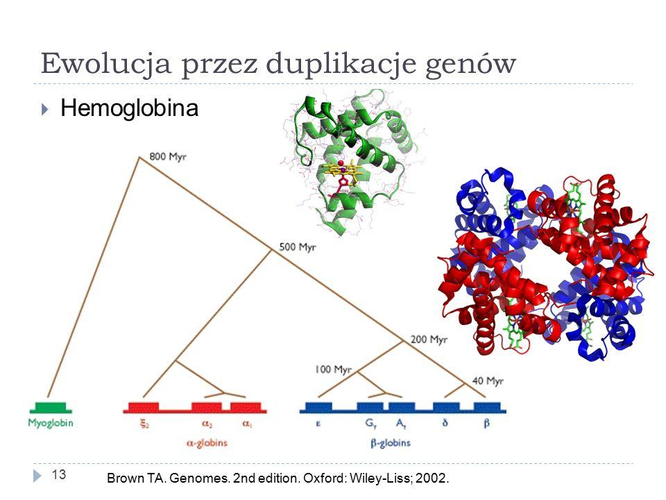 Ewolucja przez duplikacje genów 13  Hemoglobina Brown TA.