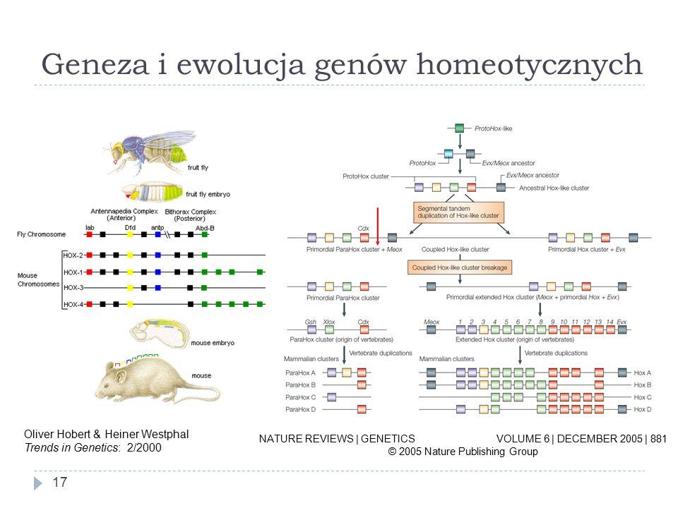 Geneza i ewolucja genów homeotycznych 17 NATURE REVIEWS | GENETICS VOLUME 6 | DECEMBER 2005 | 881 © 2005 Nature Publishing Group Oliver Hobert & Heiner Westphal Trends in Genetics: 2/2000