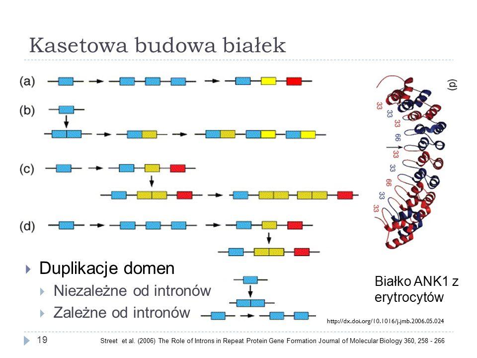 Kasetowa budowa białek 19  Duplikacje domen  Niezależne od intronów  Zależne od intronów Białko ANK1 z erytrocytów Street et al.