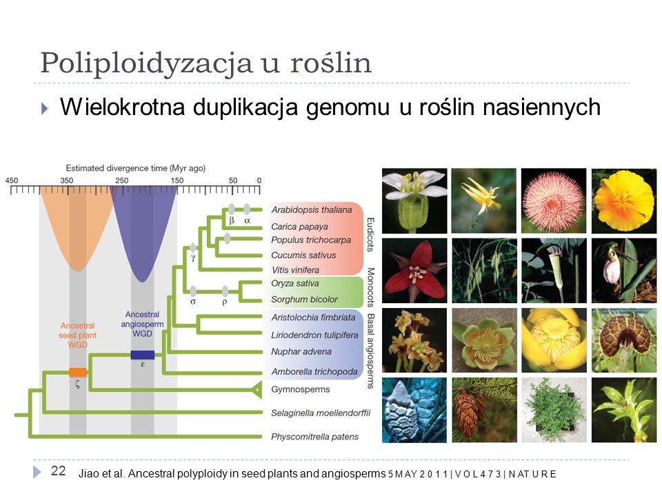 Poliploidyzacja u roślin 22  Wielokrotna duplikacja genomu u roślin nasiennych Jiao et al.