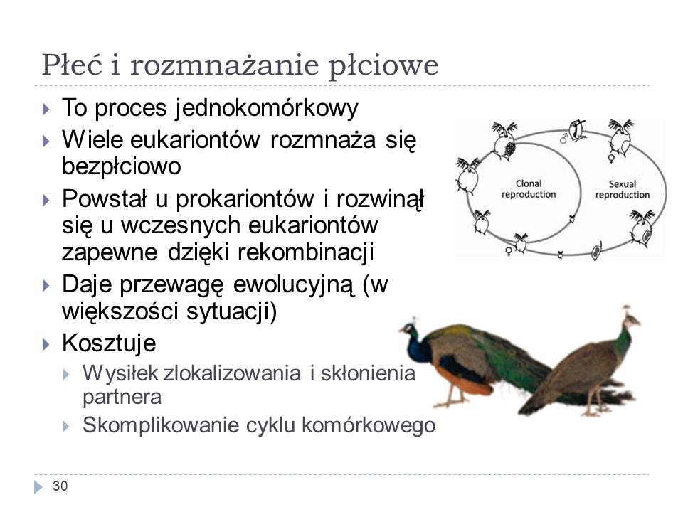 Płeć i rozmnażanie płciowe 30  To proces jednokomórkowy  Wiele eukariontów rozmnaża się bezpłciowo  Powstał u prokariontów i rozwinął się u wczesnych eukariontów zapewne dzięki rekombinacji  Daje przewagę ewolucyjną (w większości sytuacji)  Kosztuje  Wysiłek zlokalizowania i skłonienia partnera  Skomplikowanie cyklu komórkowego