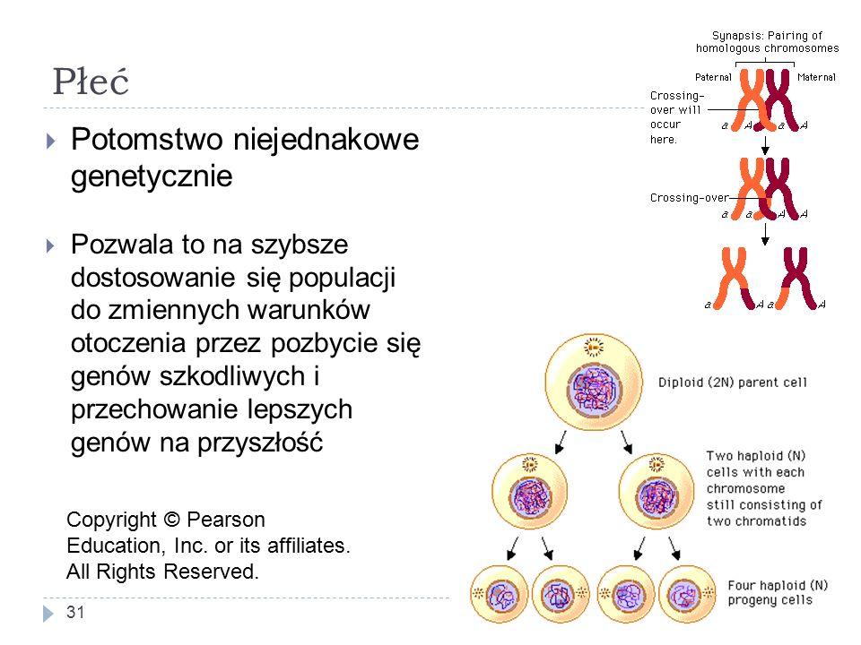 Płeć 31  Potomstwo niejednakowe genetycznie Copyright © Pearson Education, Inc.
