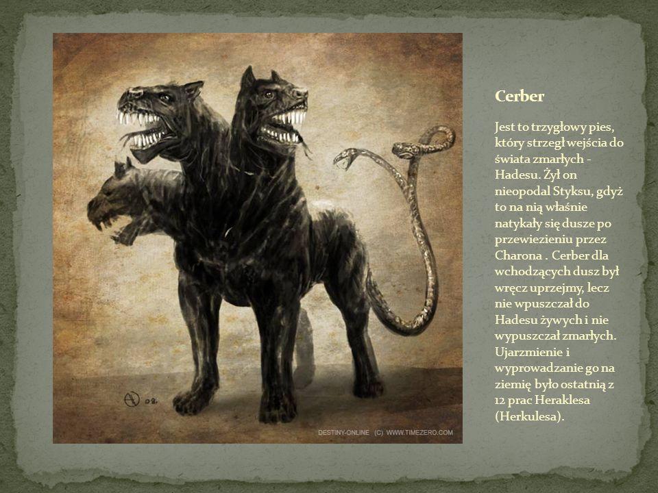 Jest to trzygłowy pies, który strzegł wejścia do świata zmarłych - Hadesu.