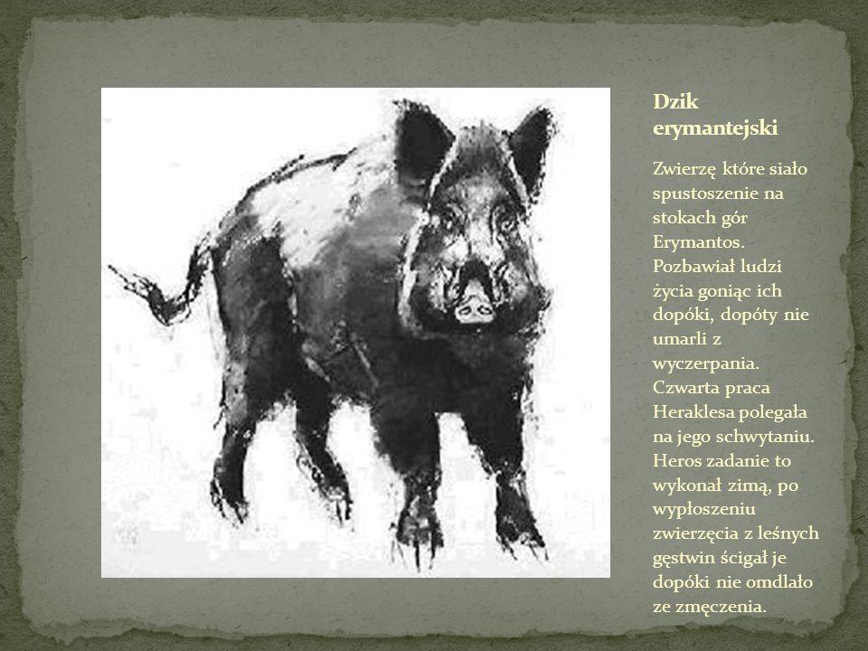 Zwierzę które siało spustoszenie na stokach gór Erymantos.