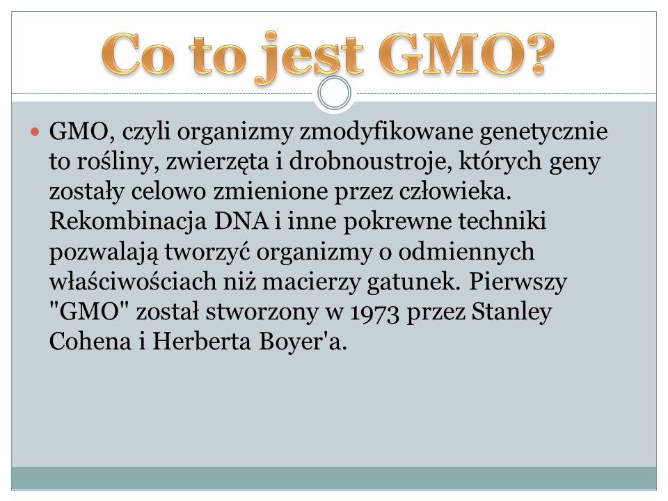 GMO, czyli organizmy zmodyfikowane genetycznie to rośliny, zwierzęta i drobnoustroje, których geny zostały celowo zmienione przez człowieka.
