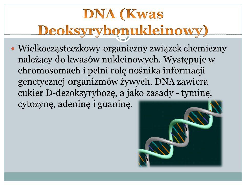 Wielkocząsteczkowy organiczny związek chemiczny należący do kwasów nukleinowych.