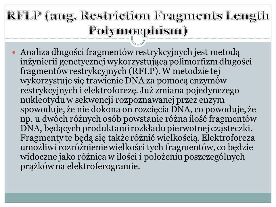 Analiza długości fragmentów restrykcyjnych jest metodą inżynierii genetycznej wykorzystującą polimorfizm długości fragmentów restrykcyjnych (RFLP).