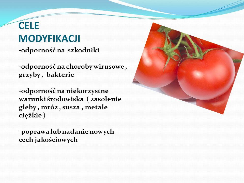 CELE MODYFIKACJI -odporność na szkodniki -odporność na choroby wirusowe, grzyby, bakterie -odporność na niekorzystne warunki środowiska ( zasolenie gl