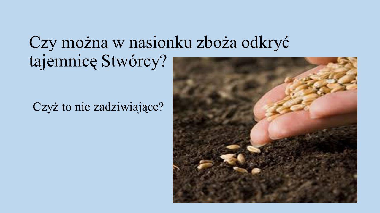 Kamil Wołoszyn klasa 6B Szkoła Podstawowa im.ks. Jana Twardowskiego w Chodlu ul.