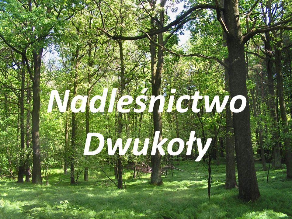 Historia Nadleśnictwo Dwukoły - jednostka organizacyjna Lasów Pań organizacyjna Lasów Państwowych, podległa Regionalnej Dyrekcji Lasów Państwowych w Olsztynie.
