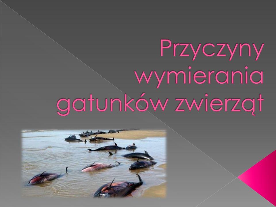  https://www.google.pl/search?q=wymieranie+gat unk%C3%B3w+zwierz%C4%85t+przyczyny&source=l nms&tbm=isch&sa=X&ei=pDxvU6Nw6orsBojkgNgJ& ved=0CAcQ_AUoAg&biw=1024&bih=610  http://pl.wikipedia.org/wiki/Wymieranie  http://www.zycieaklimat.edu.pl/index/?id=f033ab3 7c30201f73f142449d037028d  http://www.zs84.pl/uczniowie/733/www/2.html