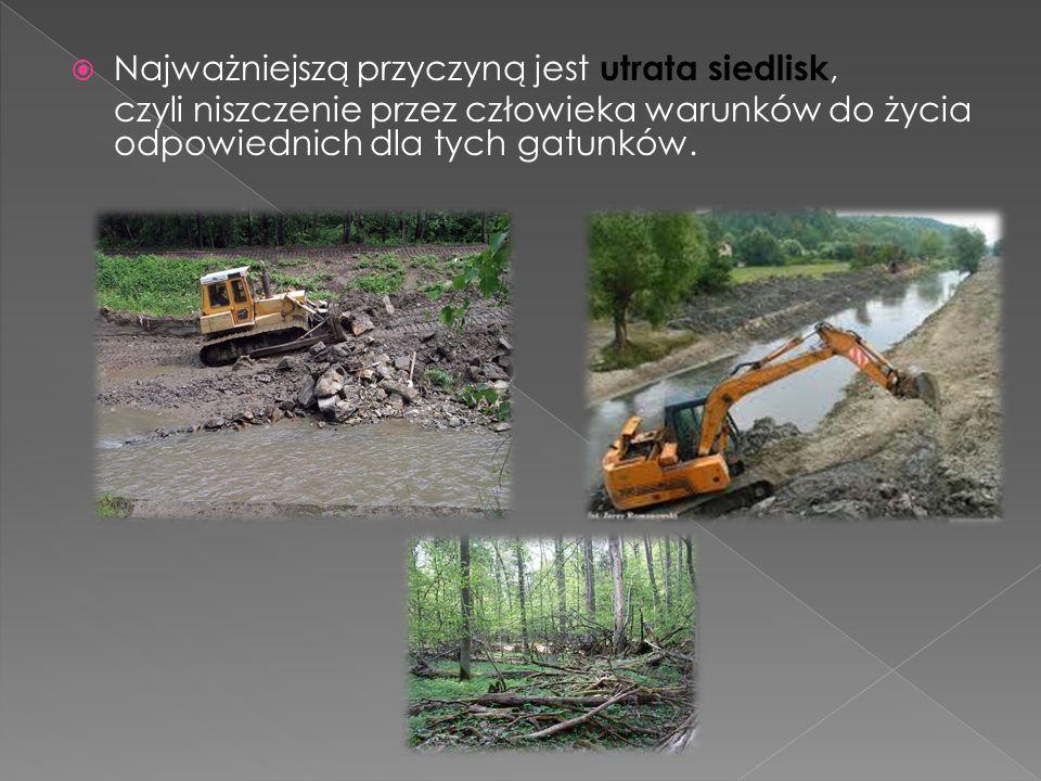  Wycinanie lasów Wycinanie lasów odbywa się w zastraszającym tempie.