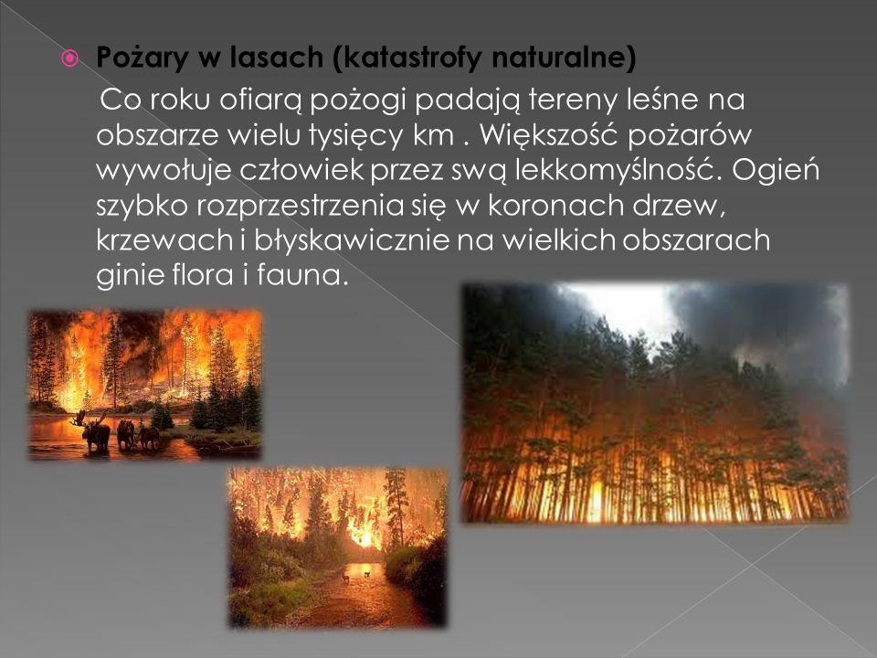  Pożary w lasach (katastrofy naturalne) Co roku ofiarą pożogi padają tereny leśne na obszarze wielu tysięcy km.